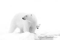 """Mom and Me"", Polar Bear and Cub, Spitsbergen, Berents Sea"