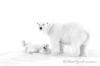 """Don't Even Think About It"", Polar Bear and Cub, Spitsbergen, Be"