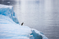 """Solo"",  Gentoo Penguin on Iceberg,  Errera Channel,  Antarctica"