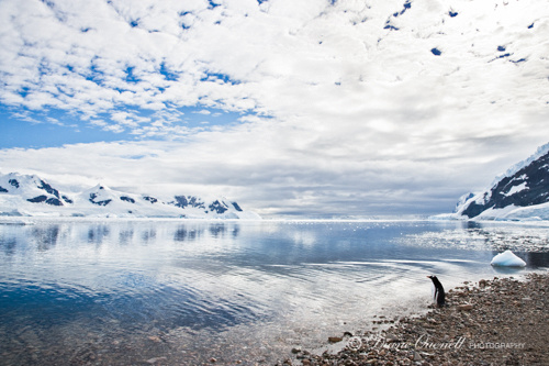 """The End of the Earth"",  Neko Harbor,  Antarctica"